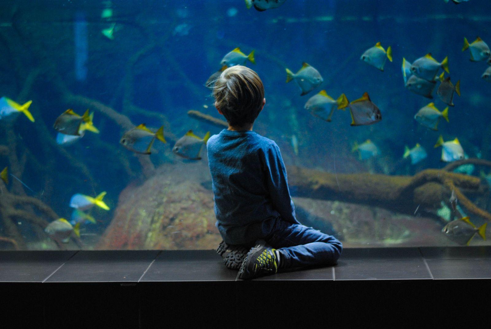 Little boy admiring the fish in the aquarium