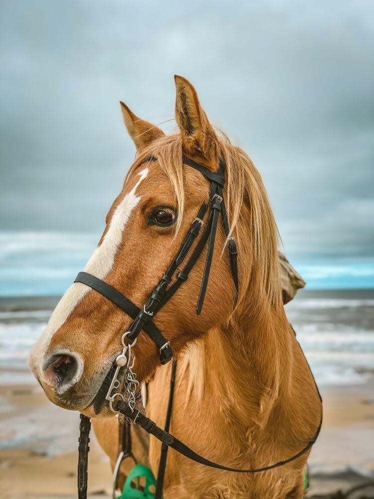 horse on anna maria island beach